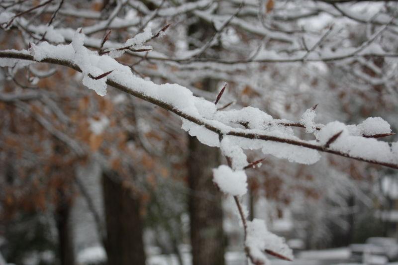 B snowy branch