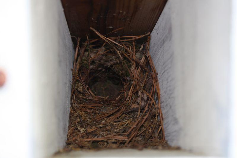 B birds nest