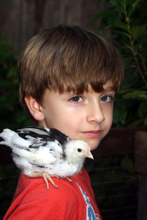 Gus & chicken